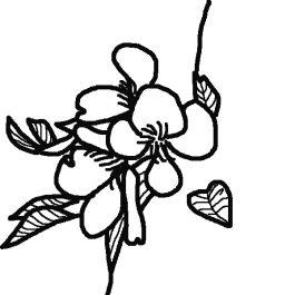 桜3本沖野2
